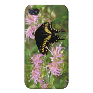 Black Swallowtail Butterfly iPhone 4 Covers
