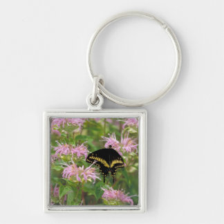 Black Swallowtail Butterfly Keychain
