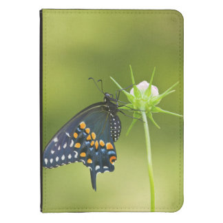 Black Swallowtail butterfly Kindle Cover