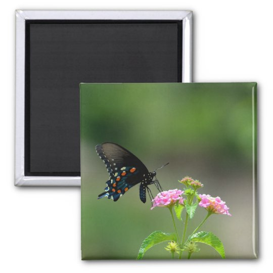 Black Swallowtail Butterfly Magnet