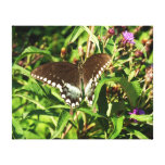 Black Swallowtail Butterfly Nature Photography Canvas Print