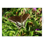 Black Swallowtail Butterfly Nature Photography Card