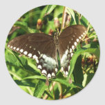 Black Swallowtail Butterfly Nature Photography Classic Round Sticker