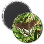 Black Swallowtail Butterfly Nature Photography Magnet