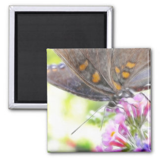 Black Swallowtail Butterfly on Buddleia Bush 2 Inch Square Magnet
