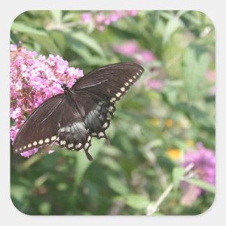 Black Swallowtail Butterfly on Butterfly Bush Square Sticker