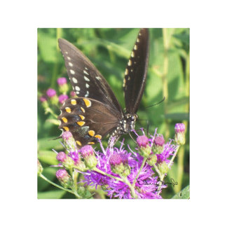 Black Swallowtail Butterfly on Canvas