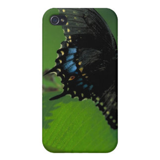 Black SwallowTail Butterfly on Flower iPhone 4 Cover
