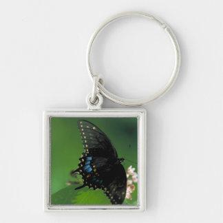 Black SwallowTail Butterfly on Flower Keychain