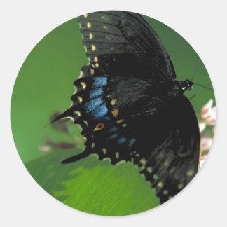 Black SwallowTail Butterfly on Flower Sticker