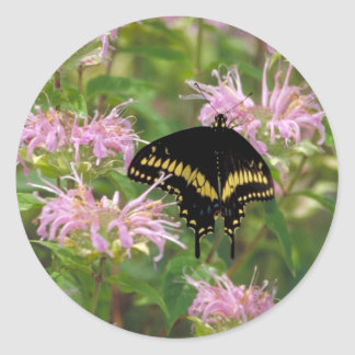 Black swallowtail butterfly photo stickers