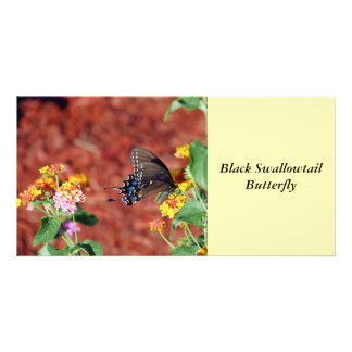 Black Swallowtail Butterfly Photo Card