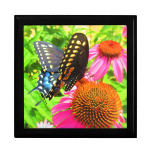 Black Swallowtail Butterfly Pink Echinacea Flowers Gift Box