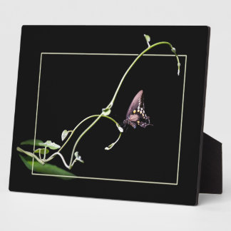 Black swallowtail butterfly plaque