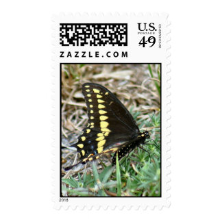 Black Swallowtail Butterfly Postage Stamp Postage Stamps