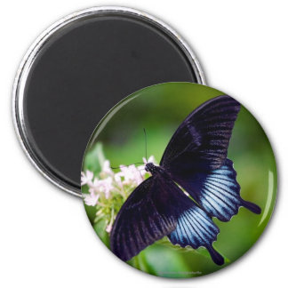 Black Swallowtail Butterfly Refrigerator Magnets