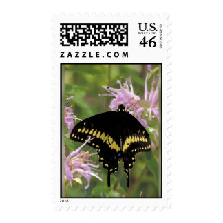 Black Swallowtail Butterfly Stamp