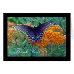 Black Swallowtail Butterfly Thank You Card
