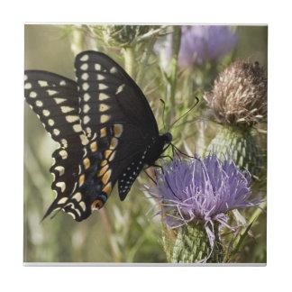 Black Swallowtail Butterfly Tile