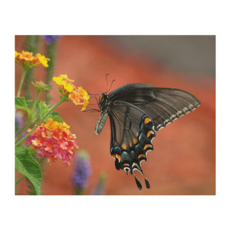 Black Swallowtail Butterfly Wood Wall Decor