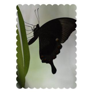 Black Swallowtail Card