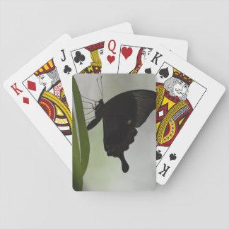 Black Swallowtail Card Decks