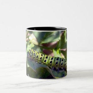 Black Swallowtail Caterpillar 1 Mug