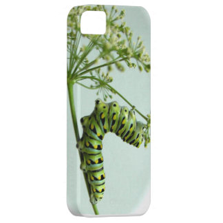 Black Swallowtail Caterpillar eating parsley iPhone SE/5/5s Case