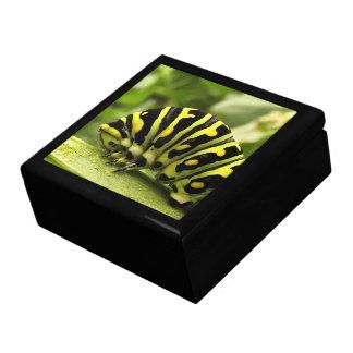 Black Swallowtail Caterpillar Keepsake Box