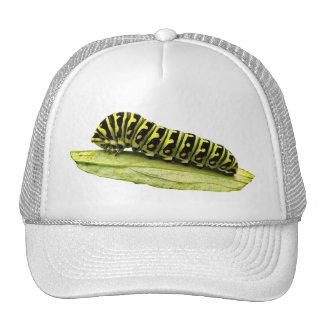 Black Swallowtail Caterpillar Trucker Hat