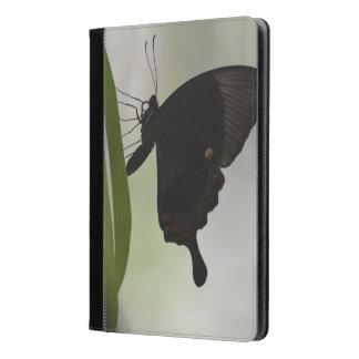 Black Swallowtail iPad Air Case