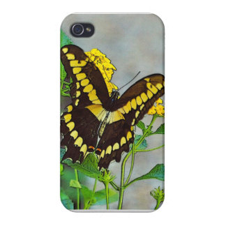 Black Swallowtail Iphone Cover