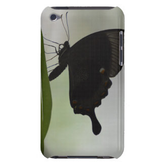Black Swallowtail iPod Touch Case-Mate Case