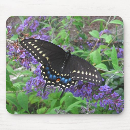Black Swallowtail ~ mousepad