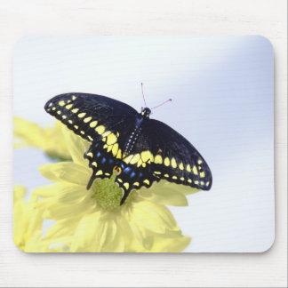 Black Swallowtail Mouse Pad