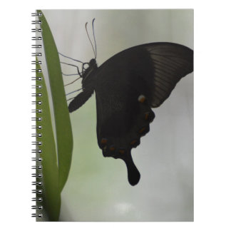 Black Swallowtail Notebook