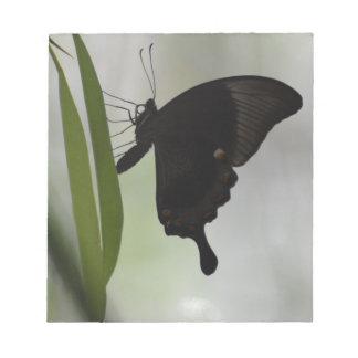 Black Swallowtail Notepad
