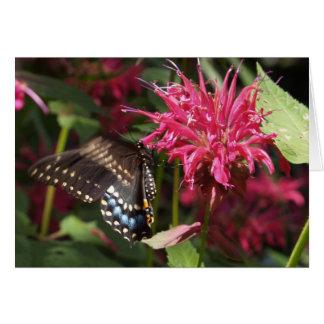 Black Swallowtail on Bee Balm Card