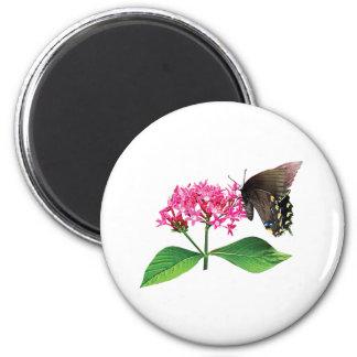 Black Swallowtail on Pink Lantana Fridge Magnet