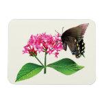 Black Swallowtail on Pink Lantana Magnets
