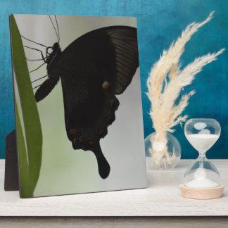 Black Swallowtail Plaque