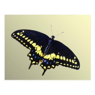Black Swallowtail Postcard