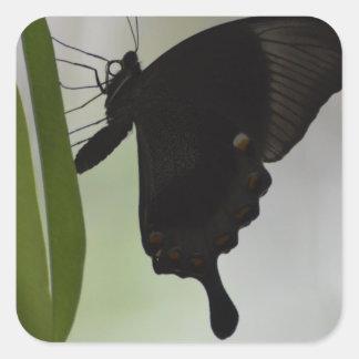 Black Swallowtail Square Sticker