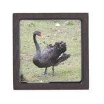 black swan_10X10 Premium Gift Box