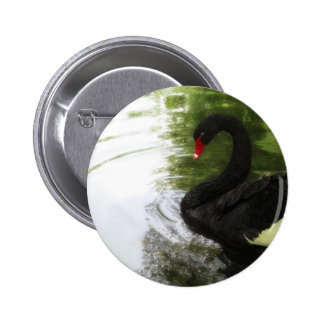 Black Swan 1 Pond Ripples Pinback Button