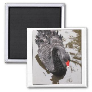 Black Swan 2 Inch Square Magnet