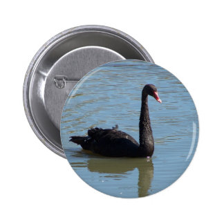 Black Swan Pinback Button
