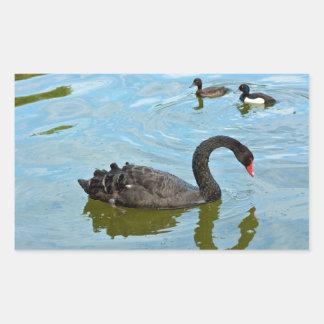 Black Swan Cygnus Atratus Sticker
