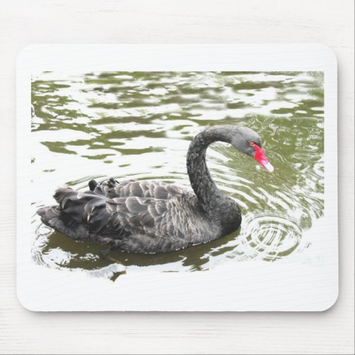 Black swan design, bird designs, cards, gifts mousepad