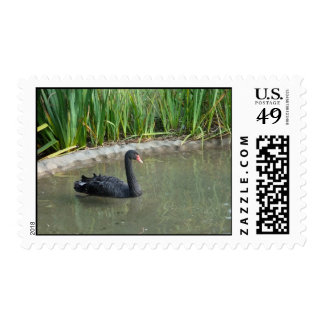 Black Swan Postage